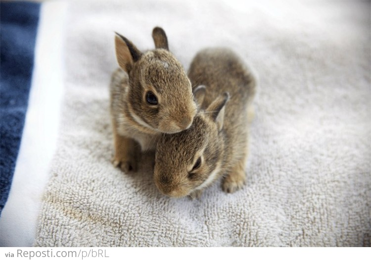 Cute Fuzzy Bunnies