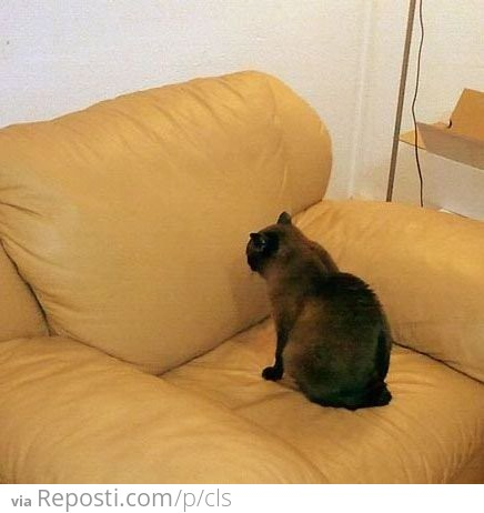 cat spay neuter clinic vermont